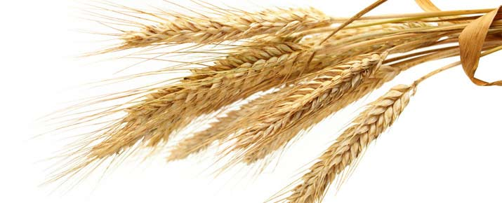 Trading du blé
