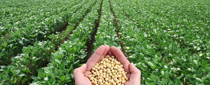 Investir sur le cours du soja en direct